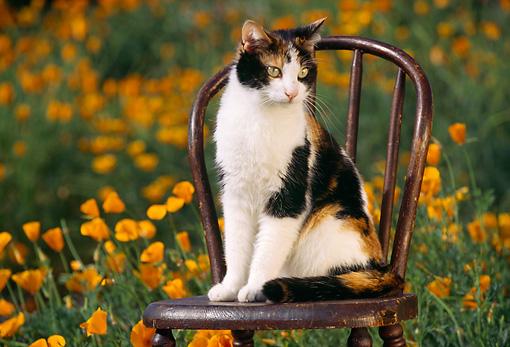 Um gato sentado em uma cadeira.